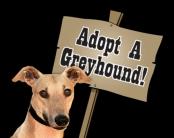 adoption_sm